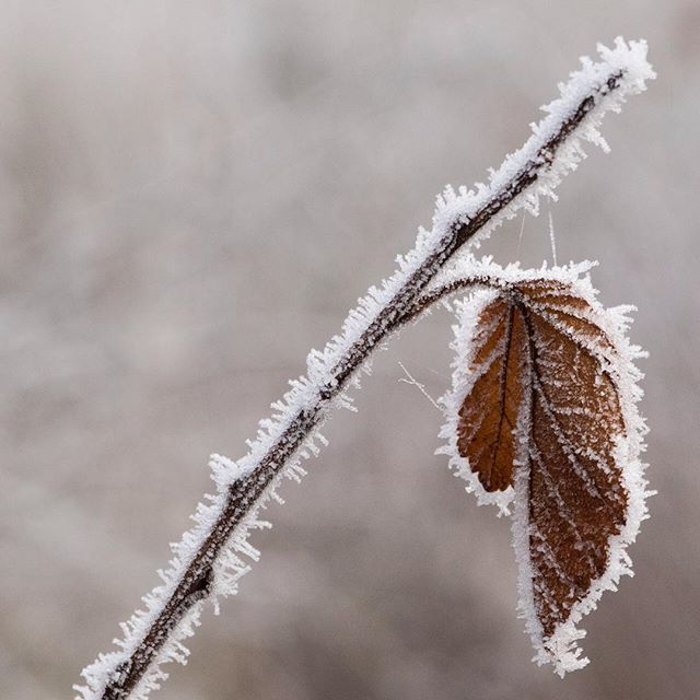 a frozen leaf and a diagonal (?)