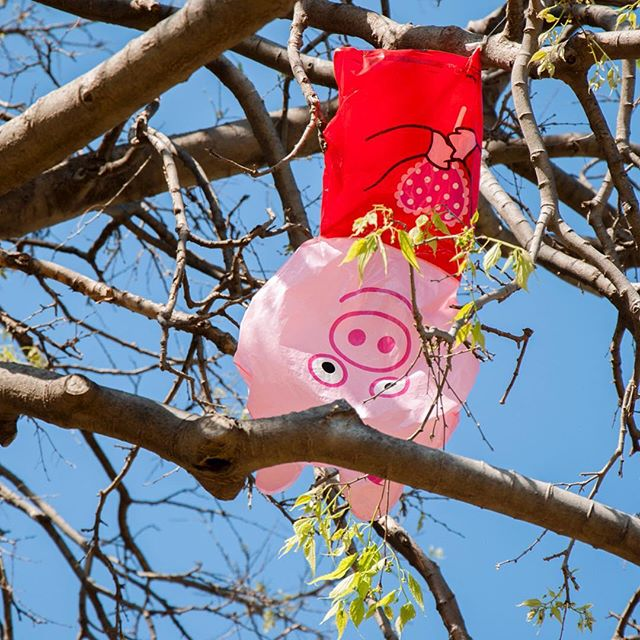 A pig balloon in a tree.