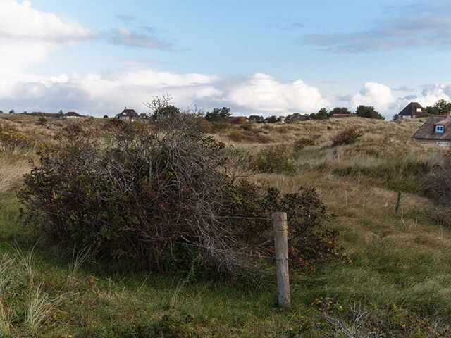 Hügeliges Ameland