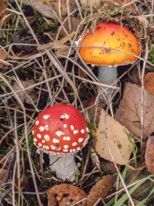 Zwei Pilze mit digitalem Rauschen